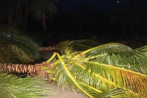 พายุพัดถล่มสวนมะพร้าวน้ำหอมเกือบยกสวน
