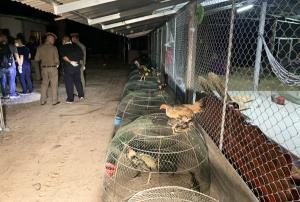 บุกจับซุ้มไก่ชนชื่อดังศรีสะเกษ ยึดยาบ้า 54,000 เม็ด ไก่ชนกว่า 800 ตัว พร้อมบ้านหรู รถยนต์
