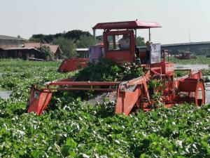 """""""ประวิตร"""" ลงพื้นที่นครปฐม ติดตามปัญหาผักตบชวา-วัชพืช สั่งเร่งกำจัดรับน้ำหลากฤดูฝน"""