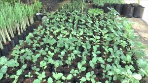 พร้อมแล้ว!! โครงการฟาร์มตัวอย่างต้านภัยโควิด-19 ที่โคกหนองนา โมเดล