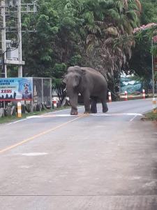 """เอ็นดู! เผยภาพ """"พลายหลับ"""" ช้างป่าเขาใหญ่ ยืนหลับพิงต้นไม้ หลังเดินเล่นชมธรรมชาติ"""