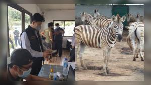 กรมอุทยานฯ แจงดรามาโรคระบาดม้าจากการนำเข้าม้าลาย ย้ำนำเข้า-ส่งออกสัตว์ป่า ต้องมีใบรับรองสุขภาพจากต้นทาง