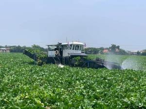 กรมเจ้าท่าเร่งกำจัดผักตบชวาแม่น้ำน้อย เพิ่มพื้นที่รับน้ำ