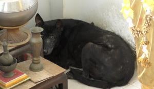 น้องหมา 2 ตัวนอนเฝ้าศพแม่ชีที่เสียชีวิตภายในกุฏิ ไม่ยอมให้ใครเข้าใกล้