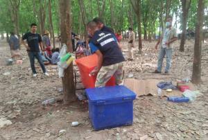 บุกจับเซียนพนันผู้สูงวัย! เล่นเบี้ยโบกกลางสวนยางแตกหนีกระเจิง แต่ต่างหมดแรงนั่งทรุดกับพื้นให้จับอื้อ