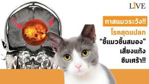 """ทาสแมวระวัง!! โรคสุดแปลก """"ขี้แมวขึ้นสมอง"""" เสี่ยงแท้ง-ซึมเศร้า!! [มีคลิป]"""
