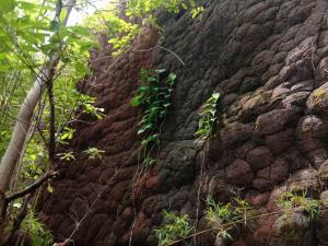 ถ้ำนาคา (ภาพ เพจ : ประชาสัมพันธ์ กรมอุทยานแห่งชาติ สัตว์ป่า และพันธุ์พืช)