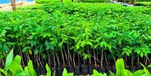 THE FORESTIAS by MQDC ทุ่ม 25 ล้าน จัดซื้อกล้าไม้มอบชุมชนบ้านอำเภอ