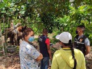 ช้างป่าล้มป่วยกลางป่าขนุนอาการดีขึ้น สามารถยืนและกินอาหารได้