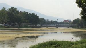 ตะลึง! น้ำปิงเชียงใหม่กลายเป็นสีมรกต สาหร่ายเขียวคลุมทึบวงกว้างทางยาวเหนือน้ำนิ่งช่วงผ่านเมือง