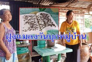 เดือดร้อนหนัก! ชาวบุรีรัมย์วอนช่วย ฝูงแมลงวันบุกหมู่บ้าน ต้องกางมุ้งกินข้าว เชื่อเหตุฟาร์มหมู-ไก่