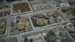 จีนขุดโบราณวัตถุจาก 'เนินหอย 8,000 ปี' ในเจ้อเจียง