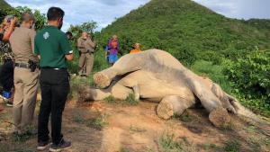 สลด! ช้างป่ากุยบุรีไฟช็อตล้มคาไร่มะม่วง จนท.เผยในรอบ 1 เดือน ตายแล้ว 2 ตัว