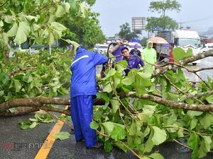 เมืองลุงฝนถล่มลมพัดแรงทำต้นไม้หักโค่น หลังคาเต็นท์รถยนต์มือสองพังเสียหาย
