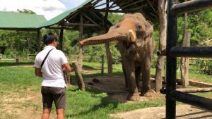 ช้าง 22 เชือกรอดแล้ว! ปางช้างบ้านรวมมิตร เชียงรายได้เฮเตรียมเปิดรับนักท่องเที่ยวแล้ว
