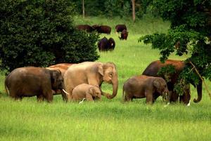 เครดิตภาพ WWF ประเทศไทย