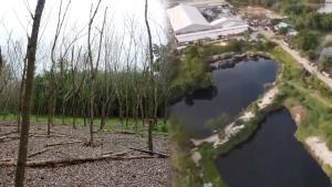 """""""น้ำเสีย"""" รอบโรงงานรีไซเคิลที่บ้านค่าย จ.ระยอง ทำสวนยางยืนต้นตาย พืชผลเสียหายหนัก"""