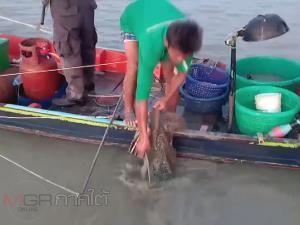ประมงจังหวัดนครฯ เข้าจับกุมเรือประมงพื้นบ้านทำผิดกฎใช้ลากข้างคานถ่าง