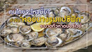 """คนไทยจะไหวมั้ย? กำจัด """"หอยนางรมแปซิฟิก"""" ระบาดทั่วหาดนอร์เวย์"""
