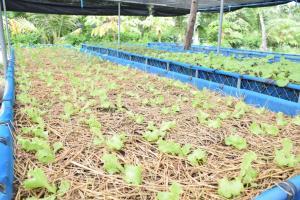ศูนย์ศึกษาการพัฒนาห้วยทรายฯ จ.เพชรบุรี ขยายผลนวัตกรรมรับเกษตรกรยุคใหม่หลังวิกฤติโควิด-19