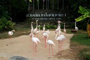 ฟรี! เที่ยวสวนสัตว์วิถีใหม่ 6 แห่ง ทั่วประเทศ ระหว่าง 15-30 มิ.ย.นี้ จองล่วงหน้าเท่านั้น