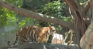 """ทส.เตรียม 7 มาตรการ """"Zoo New Normal"""" เปิด """"6 สวนสัตว์"""" เริ่ม 15 มิ.ย.นี้"""