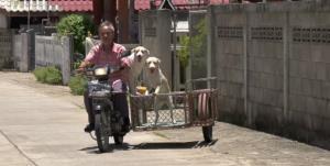 น่าทึ่ง! หมาแสนรู้เปิดประตูรั้วให้ ผช.ผญบ.เมืองเถิน-โดดขึ้นหลังคารถยังกับบอกเลขสองตัวบน