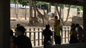 สวนสัตว์เชียงใหม่สุดคึกคักเปิดวันแรกหลังโดนพิษโควิด-19 ชมฟรีถึงสิ้น มิ.ย. 63