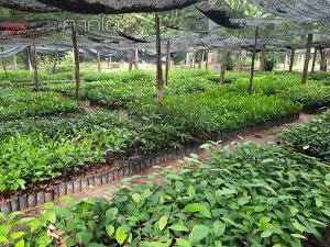 เกษตรกรปัตตานีแห่รับต้นกล้าไม้เศรษฐกิจเพื่อนำไปปลูกในพื้นที่ หวังสร้างรายได้ที่ดีในอนาคต