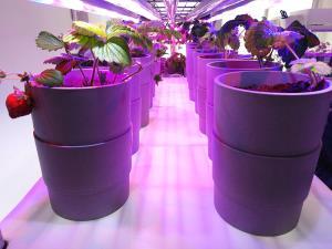 ไอเดียปลูกผัก-ผลไม้ออแกนิกในอพาร์ตเมนต์ นวัตกรรมเกษตรต่อยอดธุรกิจก่อสร้าง (ชมคลิป)
