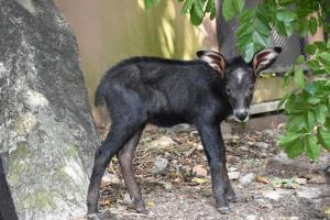 น้องโควิด สมาชิกใหม่แห่งสวนสัตว์เปิดเขาเขียว (ภาพ : สวนสัตว์เปิดเขาเขียว Khao Kheow Open Zoo)