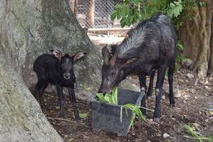 ภาพ : สวนสัตว์เปิดเขาเขียว Khao Kheow Open Zoo