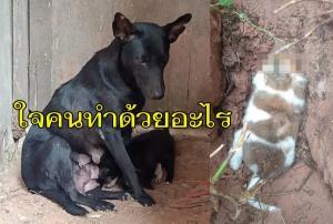 จิตใจทำด้วยอะไร! สองแม่ลูกบุรีรัมย์โร่แจ้งจับคนใจเหี้ยมตัดหัวลูกสุนัข ทิ้งซากลำตัวไว้ดูต่างหน้า