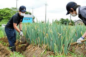 บทเรียนจากโควิด จนท.สนามบินนาริตะผันตัวช่วยชาวไร่เก็บเกี่ยวต้นหอม