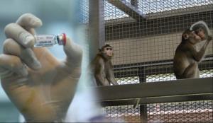 """ทดสอบวัคซีนโควิด mRNA จุฬาฯ ในลิงได้ผลดี เตรียมกระตุ้นอีกเข็ม 22 มิ.ย. """"อนุทิน"""" อัดงบ 3 พันล. กล้าทดลองฉีดเข็มแรก"""