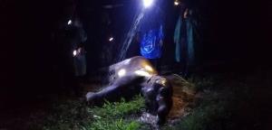 สุดสลด! ช้างน้อยป่า 2 ตัว ร้องลั่นโหยหวน ก่อนตายคารั้วไฟฟ้าคาดถูกช็อต