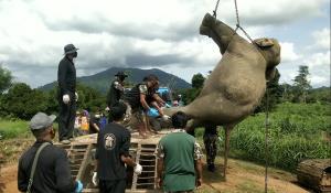 พบ 2 ช้างป่าถูกไฟช็อตตายในไร่สหมิตร จันทบุรี ตร.ตั้งข้อหาผิด พ.ร.บ.สงวนและคุ้มครองสัตว์ป่า