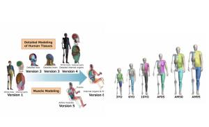โตโยต้า เปิดซอฟต์แวร์ THUMS เทคโนโลยีจำลองร่างกายมนุษย์เพื่อวิเคราะห์อาการบาดเจ็บจากรถชน