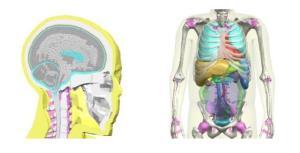 โตโยต้า พัฒนาโมเดลจำลองมนุษย์แบบเสมือนจริง เพื่อสร้างความปลอดภัยให้กับยานยนต์ โดยเริ่มจาการศึกษาร่างกายมนุษย์