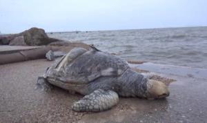 ทช.จับมือ จุฬาฯ-สนว. พิสูจน์อัตลักษณ์สัตว์ทะเลเพื่อต่อยอดสู่การอนุรักษ์