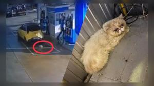 """ทาสแมวชม! ปั๊มน้ำมันช่วยเหลือ """"เปอร์เซีย"""" จอมซน หล่นจากได้ท้องรถ (ชมคลิป)"""