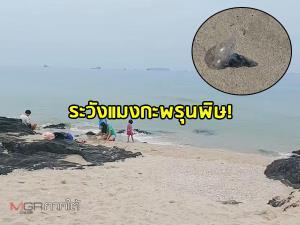 """เตือน! นักท่องเที่ยวระวัง """"แมงกะพรุนพิษ"""" ขณะลงเล่นน้ำริมชายหาดสมิหลา-ชลาทัศน์"""
