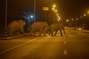 ช่วง คสช. (คืนความสุขให้ช้าง) ฝนพรำอากาศดี สามพลายหนุ่มหนีเที่ยวทั้งก๊วน!!