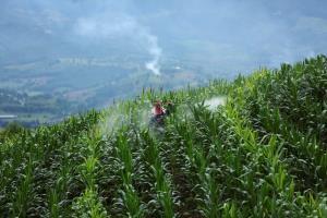 ทุกๆ นาที โดยเฉลี่ย มีพื้นที่ป่าไม้ขนาดสี่สิบสนามฟุตบอลได้ถูกโค่นทำลายไป เปลี่ยนเป็นพื้นที่อุตสาหกรรมเกษตรผลิตอาหาร อุตสาหกรรมปศุสัตว์ และพืชพลังงาน