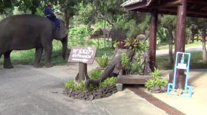 ศูนย์ช้างลำปางทำบุญครั้งใหญ่ ก่อนเปิดรับนักท่องเที่ยว New Normal เต็มรูปแบบพรุ่งนี้