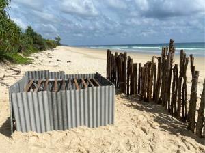 สุดแปลก ! เต่ามะเฟืองขึ้นวางไข่นอกฤดูกาล ที่หาดท้ายเหมือง จ.พังงา