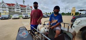 ปศุสัตว์สระแก้วรณรงค์ป้องกันโรคพิษสุนัขบ้าให้ประชาชนในพื้นที่