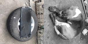 ใจอำมหิต! โจรแอบปีนเข้าบ้านคนอื่น ทุบตี-มัดขา สุนัขจนเสียชีวิต แถมยังอำพรางศพด้วยวิธีสุดโหด