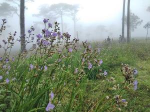 ภาพดอกหงอนนาคจากเพจสำนักบริหารพื้นที่อนุรักษ์ที่ 11 (พิษณุโลก) เมื่อวันที่ 3 ก.ค. 63