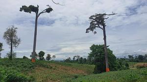 บวชต้นไม้! กุศโลบายรักษาต้นไม้ใหญ่ในเขตป่าอนุรักษ์ ที่ อช.ทุ่งแสลงหลวง
